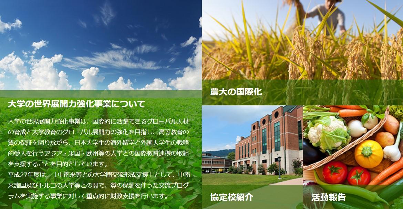 大学の世界展開力強化事業
