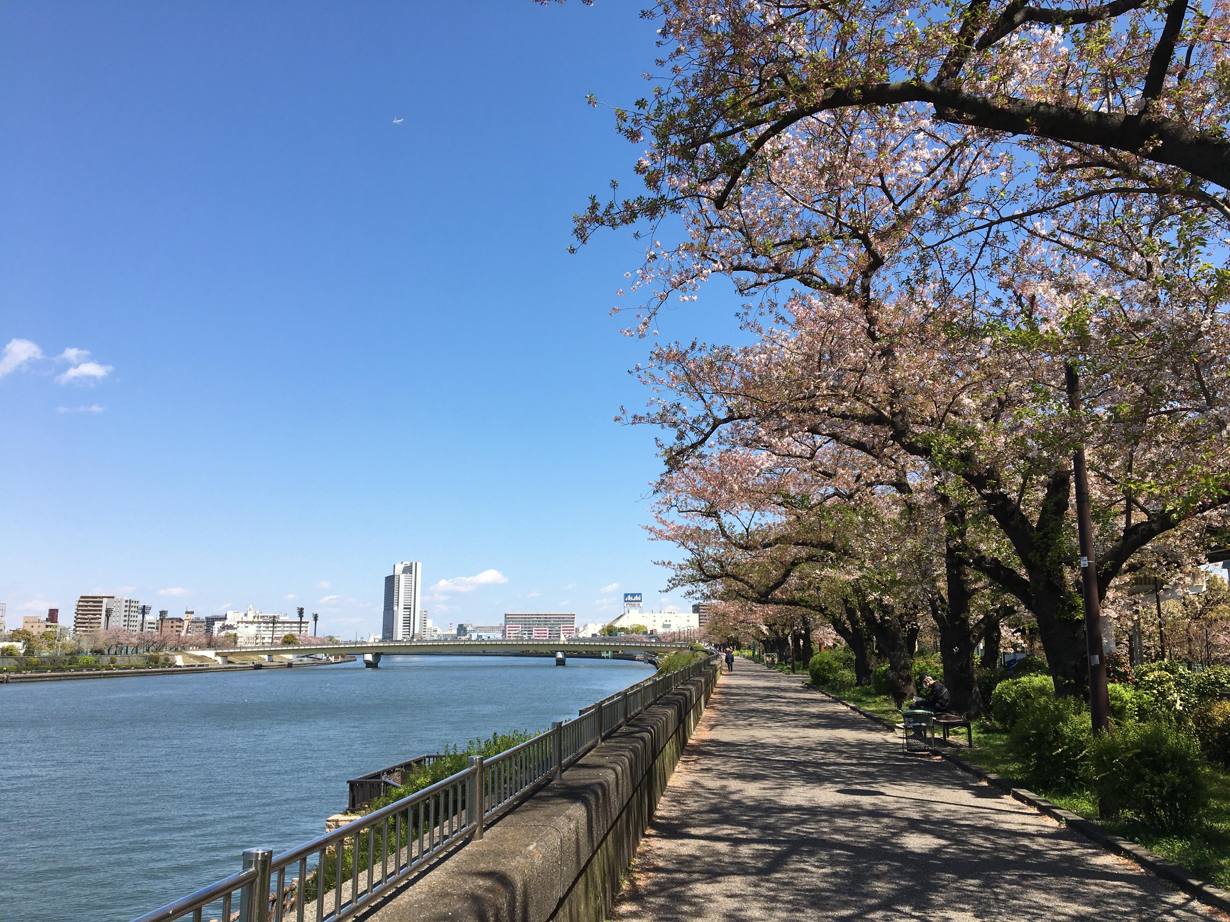 現代公園の原型: 8代将軍徳川吉宗の「花の名所づくり」(服部勉教授)