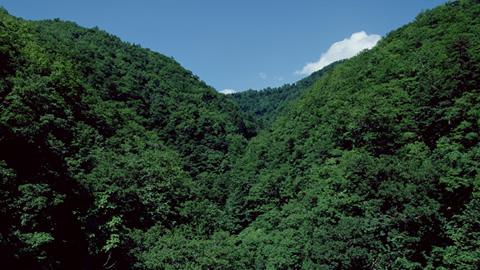 シリーズ 森林からの天然物を利用した製品の開発