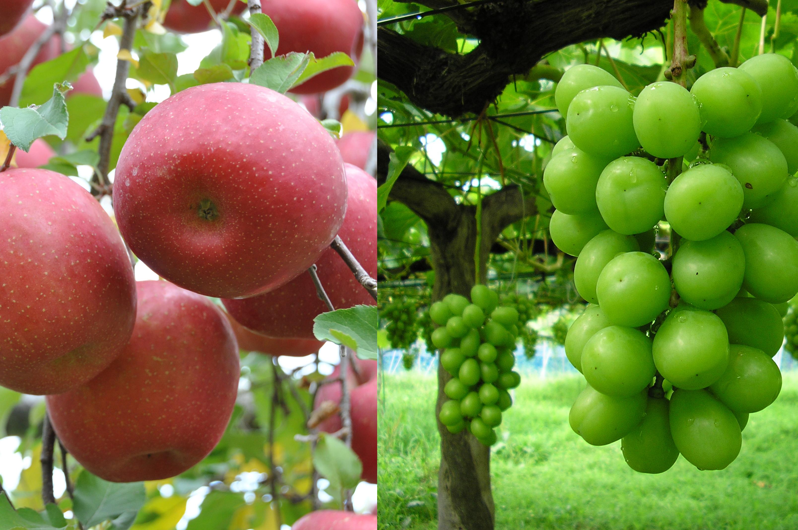 リンゴ&マスカット.jpg