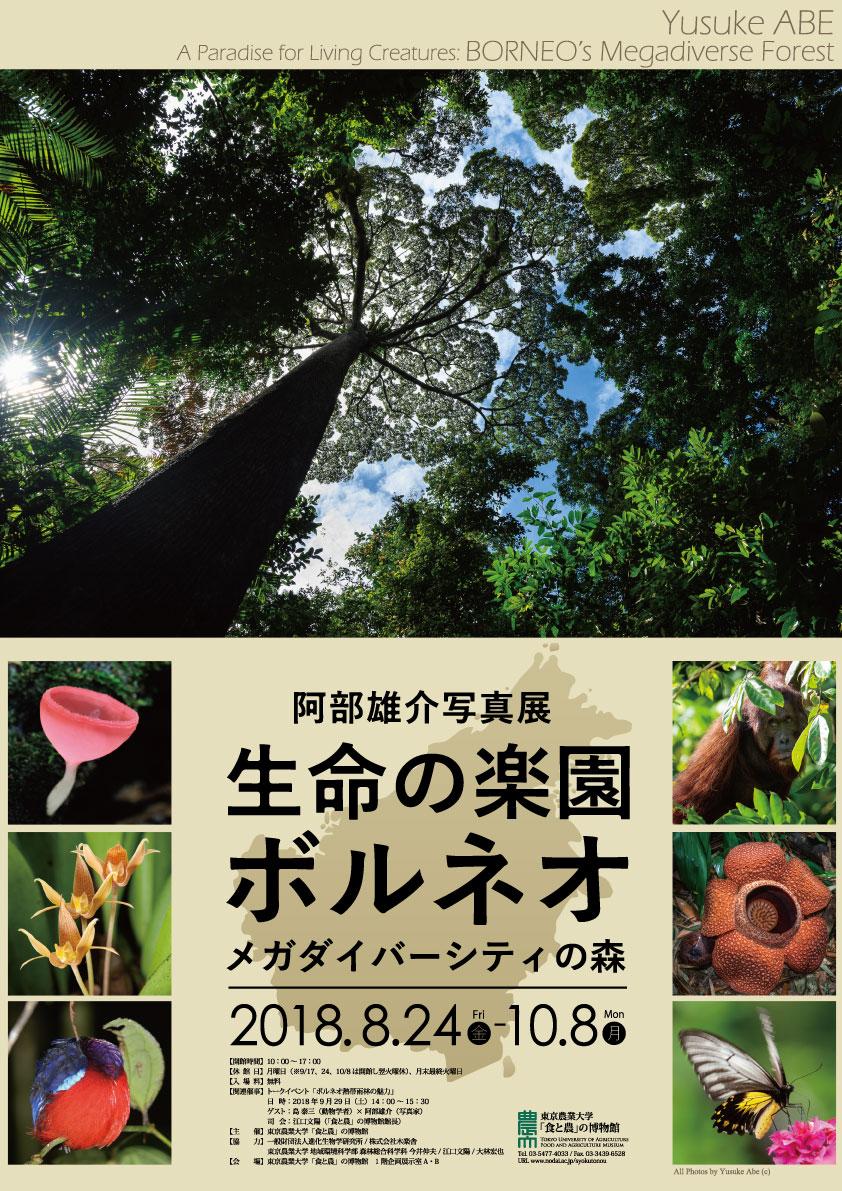阿部雄介写真展 生命の楽園ボルネオ ~メガダイバーシティの森~