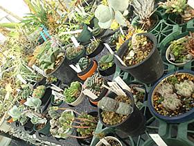 plant_a2.jpg
