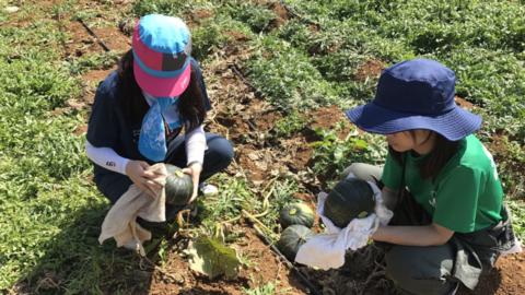 就農支援プログラム