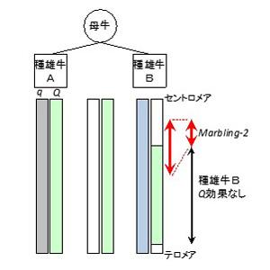 honbun_hirano_01.jpg