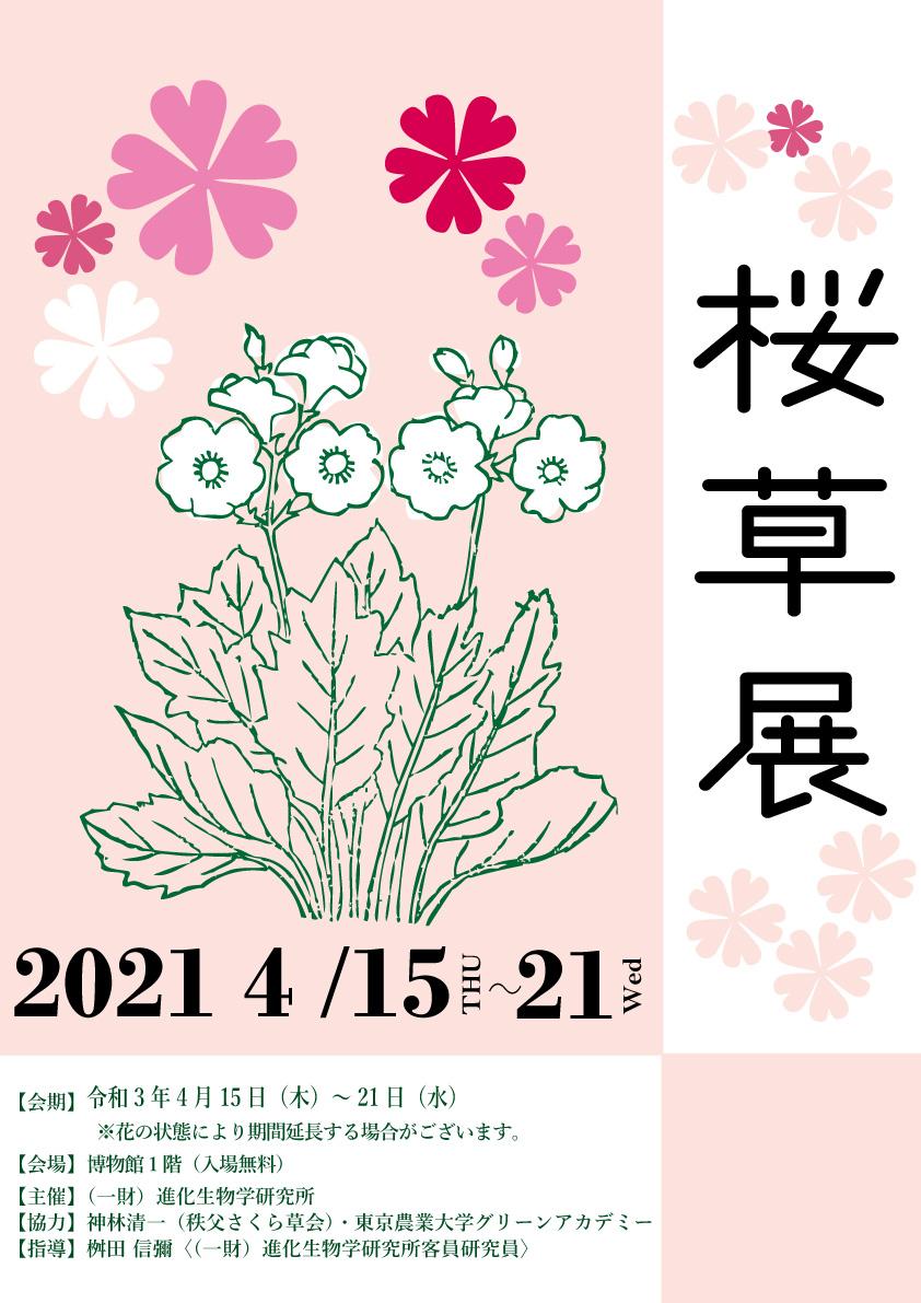 桜草展2021