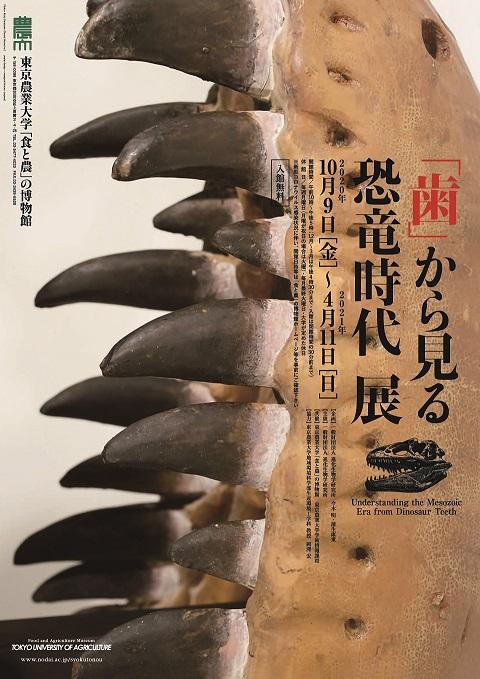 企画展示室A 「歯」から見る恐竜時代 展