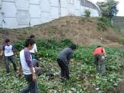 farming_a_02.jpg