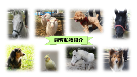 飼育動物紹介