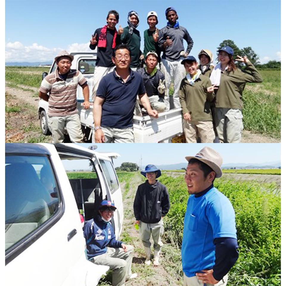 北海道における大規模農業体験「矢尾ファーム実習」